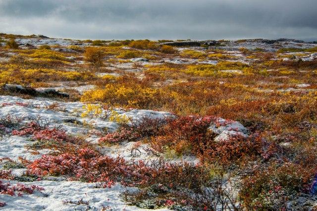 Snowy Morning at Thingvellir